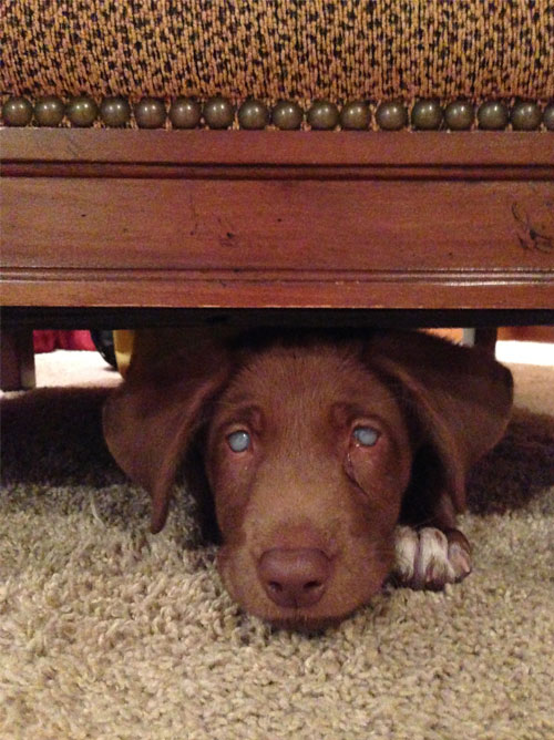 Kingston under a chair