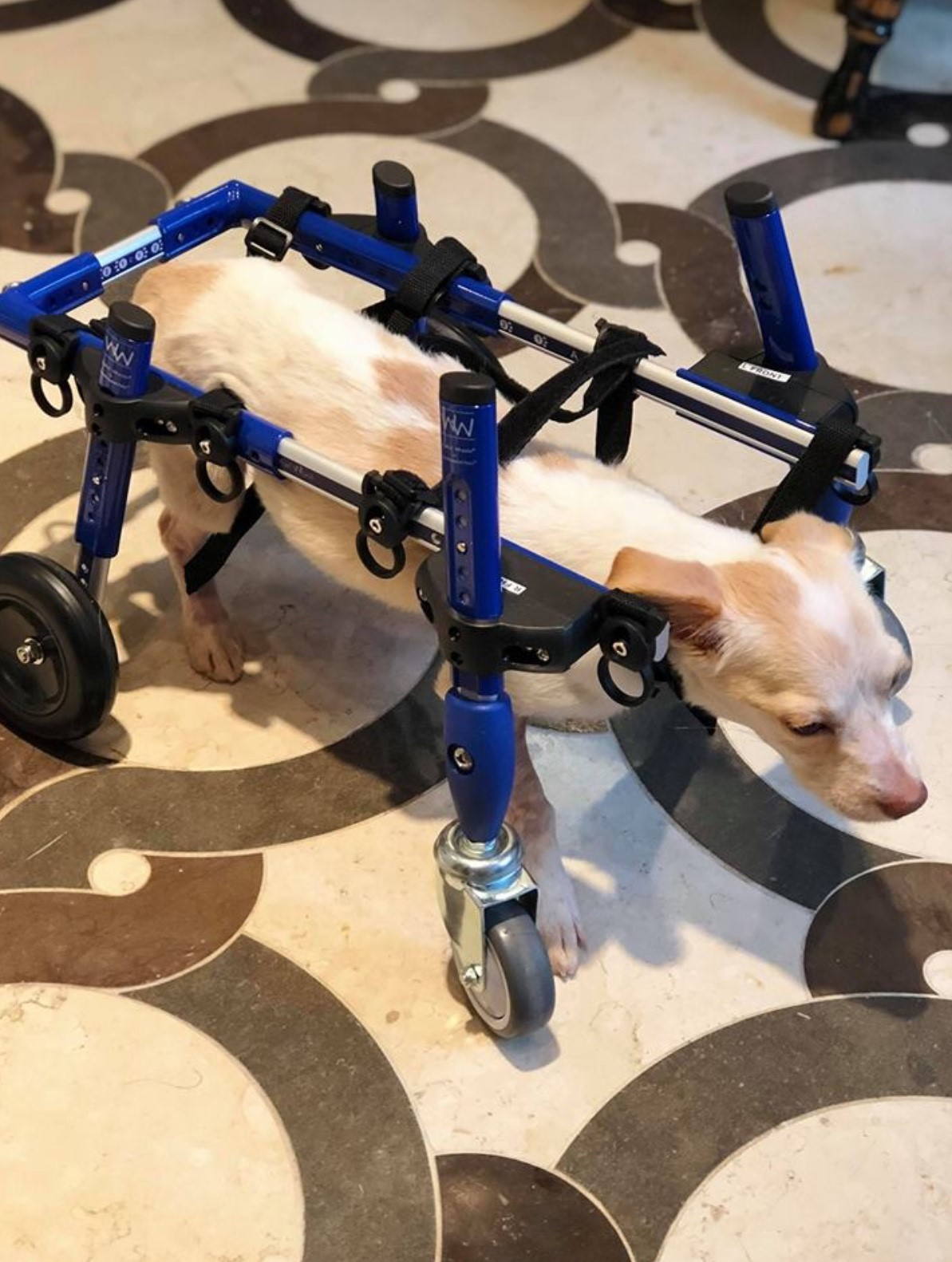 Diego in his new wheels!