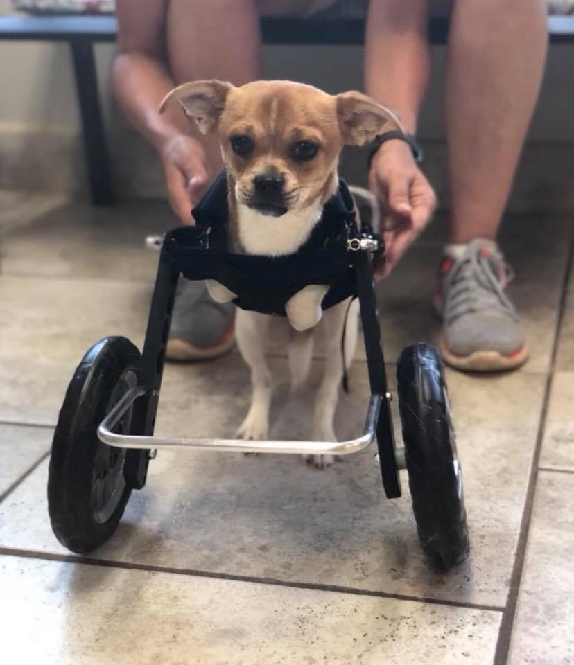 Roo in his new wheels!