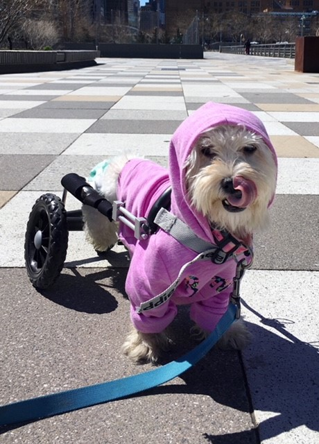 Pani in her new pink coat