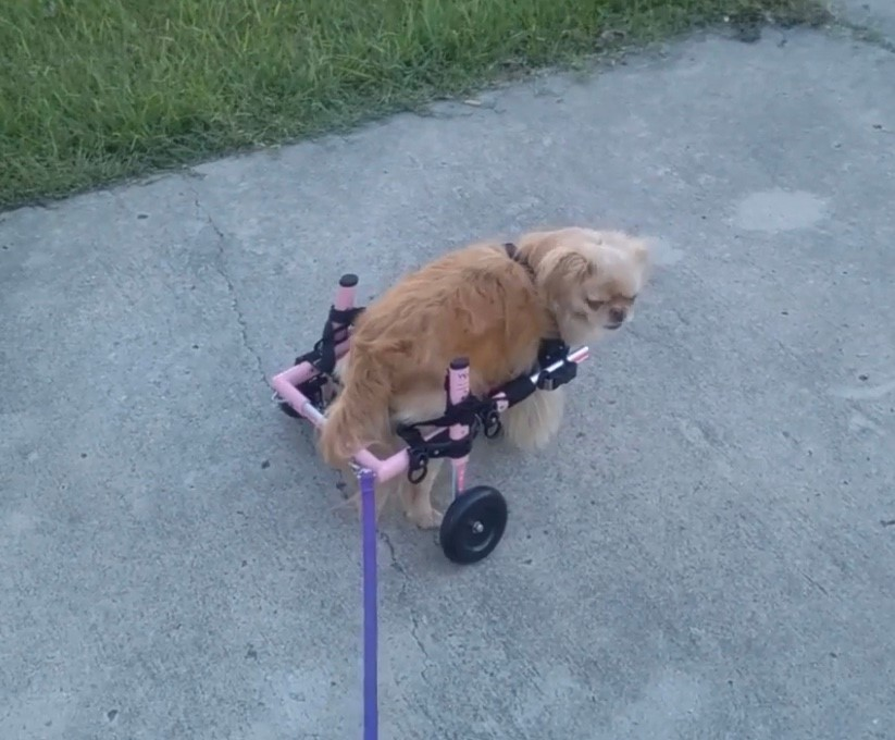 Rosie in her new wheels!